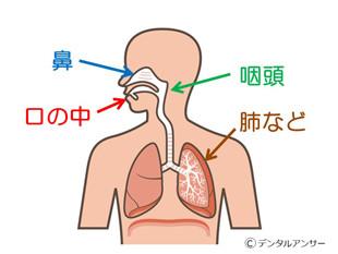 口臭が発生する原因部位